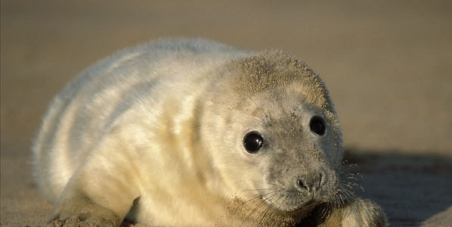 Justice for the seals bludgeoned to death at Prince Edward Island