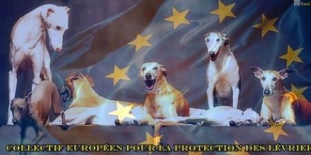 Un statut d'animal de compagnie pour les lévriers en Europe 687ed9eafaf511b65f55a947a21d9683