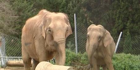 Sauvons Baby et Népal de l'euthanasie 6c14ccc68c1ace0f479e89f71f4282c4