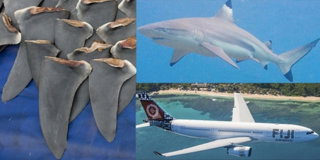 Fiji Airways and Fiji Government: Please Stop Trafficking Shark Fin to China