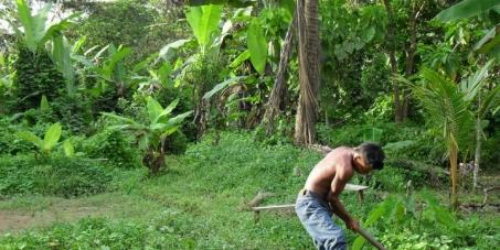 ¡Salva las semillas limpias, la diversidad y la cultura en Colombia!