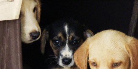 una ley severa de proteccion animal en españa que prohiba el abandono, al maltrato y las torturas en tradiciones y fiest