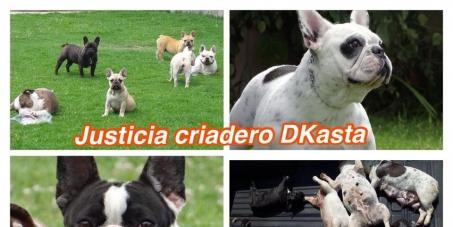 RAFAEL CORREA  -  MINISTERIO DEL INTERIOR ECUADOR : ACTIVAR LA LEY QUE CASTIGA EL DANO SOBRE LOS ANIMALES DOMESTICOS EN ECUADOR
