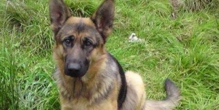Do sejmu RP: Podwyższenie kar za znęcanie się nad zwierzętami