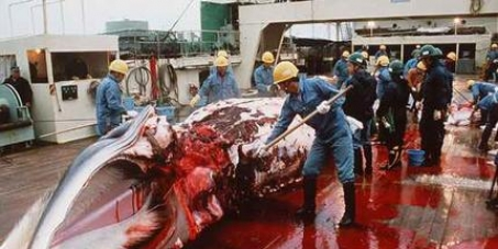 STOP the senseless slaughter of whales!!!