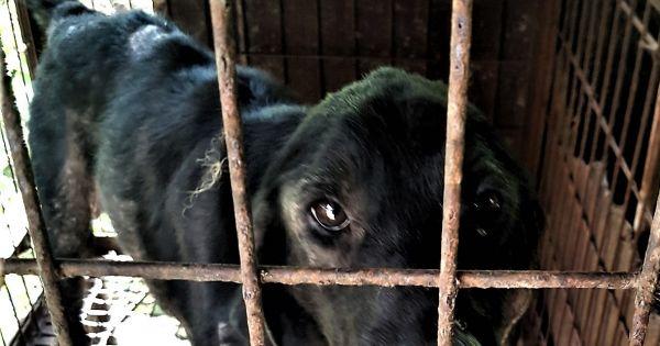 Geochang-gun, South Korea, Shut down the illegal dog farms!