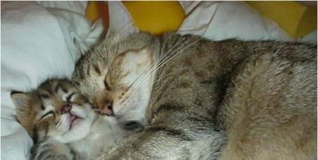Monsieur le maire de Cabrières  (34800) :Arrêtez les massacres des chats de votre commune
