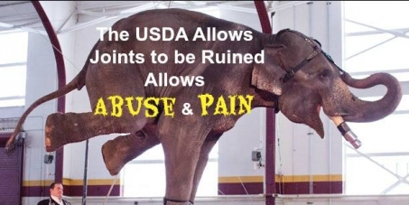 USDA! Stop Cruelty to Animals in Aquariums, Zoos, Circuses, Puppy Mills