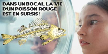 Faire interdire la vente des boules en verre des rayons aquariophiles en France. PAS DE BOCAL pour les poissons.