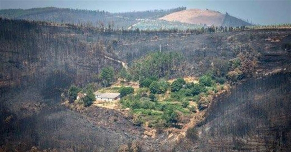 Prevent future fires! Reforest Portugal with native trees. Previna novos incêndios! Refloreste Portugal.