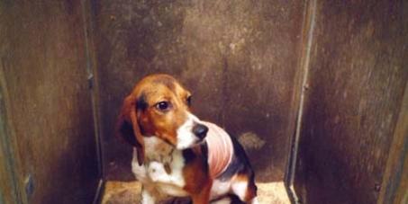 Kennzeichnungspflicht veganer und tierversuchsfreier Produkte zur längerfristigen Vermeidung von Tierversuchen