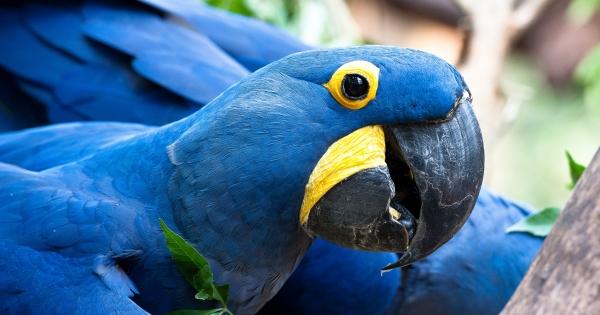 Congresso Nacional: Não tirem a proteção de espécies ameaçadas