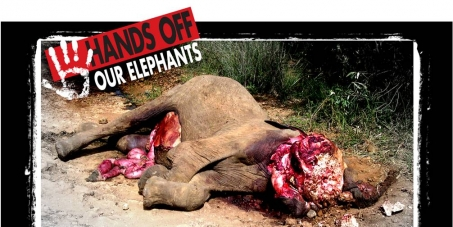 Stop the Elephant Slaughter in Kenya