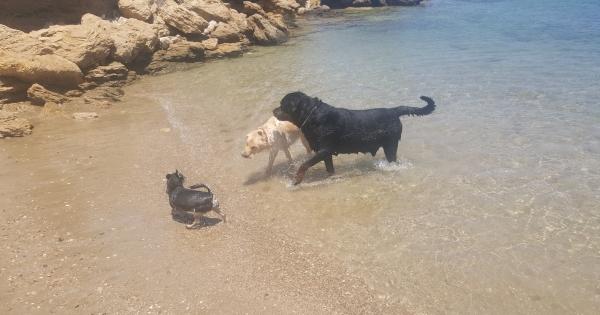 Δήμαρχο Παραλιμνίου: : Κάτω τα Χέρια από την παραλία των σκύλων στο Παραλίμνι