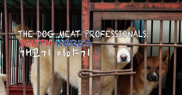 Goseong, South Korea, Shut down the illegal dog farms!