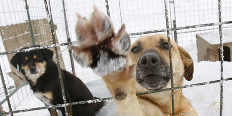 CHINESE GOVERNMENT: Nobody touch the DOG - stop DOGS slaughter in China