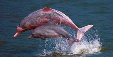 Save the Hong Kong Pink Dolphins