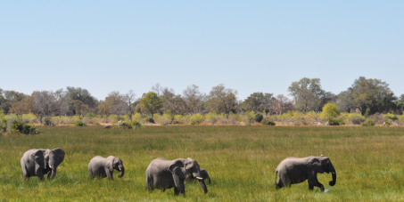 Declare the spectacular Okavango Delta a UNESCO World Heritage Site