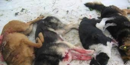 NO TO EUTHANASIA OF DOGS IN ROMANIA!