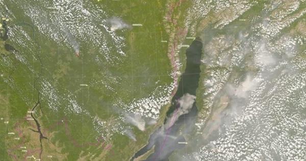Путин Владимир Владимирович: Спасти леса Сибири
