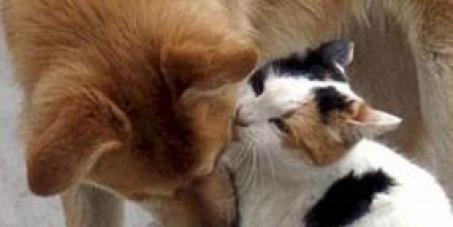 Melhorias para o Centro de Bem Estar Animal de Joinville - Sc