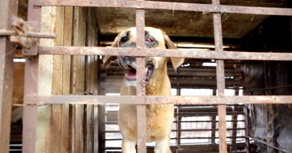 Hapcheon, South Korea, Shut down the illegal dog farms!