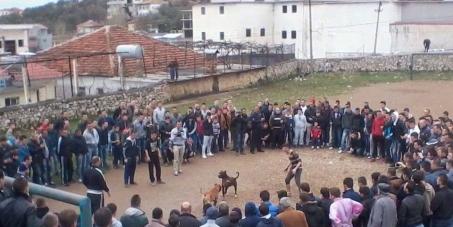 Saimir Tahiri, Minister of Internal Affairs: STOP - Dog Fighting in Albania!