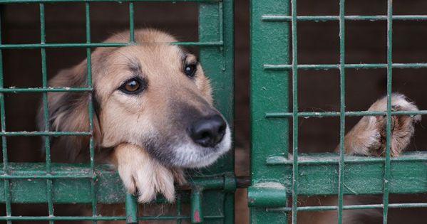 Να αποσυρθεί ΟΡΙΣΤΙΚΑ το σχέδιο νόμου του ΥΠΑΑΤ για τα ζώα συντροφιάς - Επίσημο ψήφισμα