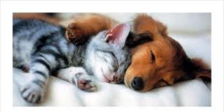 Gesetzliches Verbot gegen das Verzehren von Haustieren wie Hunde und Katzen in der gesamten Schweiz.