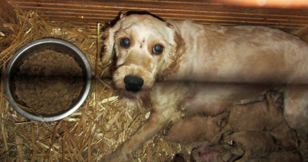 Michael Creed: Stop Ireland's puppy farming