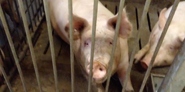 Ministero della Salute: Vietare i test sugli animali per i prodotti alimentari