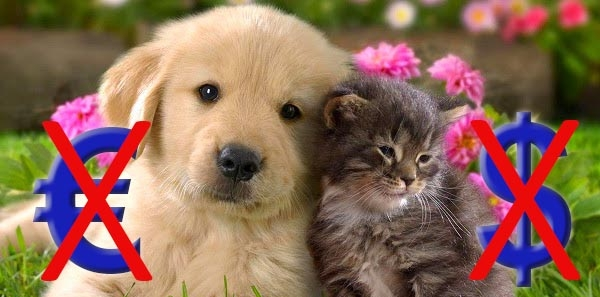 Monsieur le président de Facebook, Mark Zuckerberg: Abandonnez votre projet de faire payer les photos de chats et de chiens