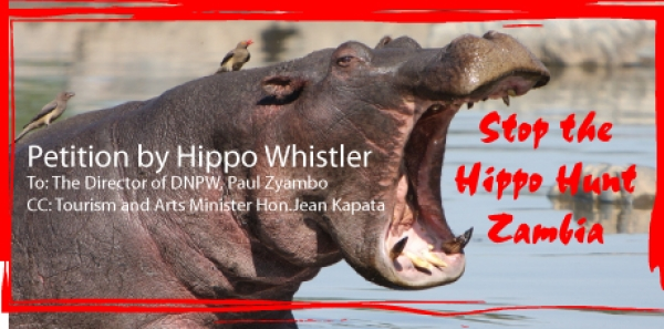 To: The Director of DNPW, Paul Zyambo & Tourism Minister Hon. Jean Kapata: Stop the Hippo Hunting (Cull) in Luangwa Valley, Zambia