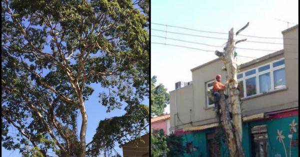 Subprefeitura de Pinheiros - São Paulo Capital: Queremos criar um símbolo de maus tratos com nossas árvores