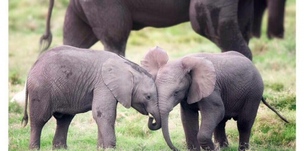 The Council of Washington DC (Committee on the Judiciary): Move Forward on Legislation to Ban Ivory Sales in Washington DC