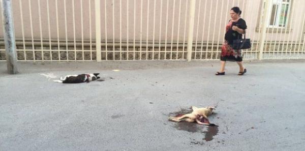 Первая леди Мехрибан Алиева : Призываем Вас остановить убийство бездомных животных!