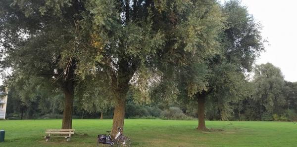 Gemeente Haren, Meerschap Paterswolde, en Groningen: Stop de kap van 250 bomen in Hoornsemeer voor Hampshire Hotel