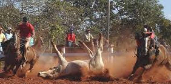 Presidente Michel Temer: Veto Projeto de Lei para legalizar a tortura de animais no Brasil Vaquejada