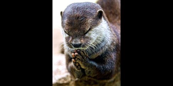 Sauvez le Zoo et le Musée d'histoire naturelle de La Chaux‐de‐Fonds (CH)