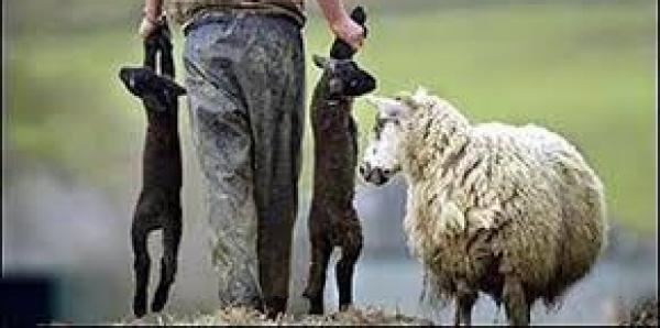 Conférence des évêques de France: Abandonner la consommation d'agneau à Pâques