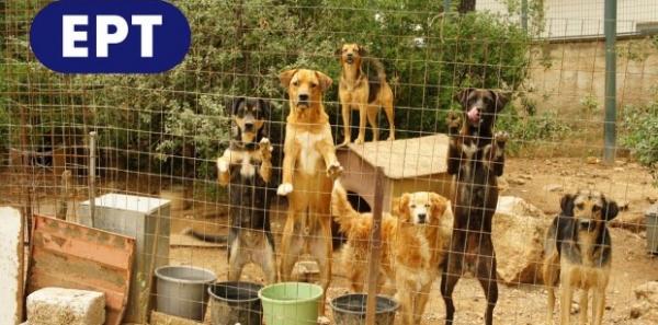 Προς κκ. Δ. Τσακνή- πρόεδρο ΕΡΤ α.ε, Γ. Σταθόπουλο - Δήμαρχο  Αγ. Παρασκευής: Μη διώξετε τα σκυλιά που φροντίζουν  οι άνθρωποι της ΕΡΤ