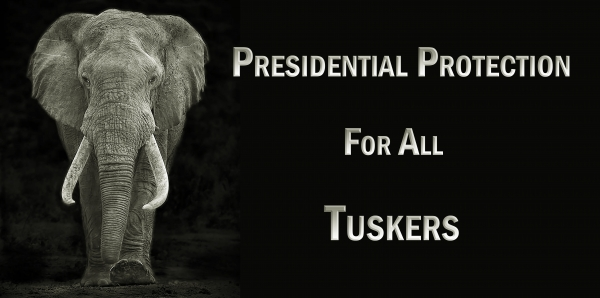 South African President Jacob Zuma: Presidential Protection for All Tuskers & Emerging Tuskers (Elephants)