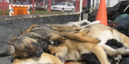 STOP KILLING DOGS IN CHILE
