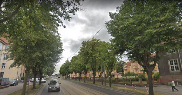 Zatrzymajmy wycinkę drzew na ul. Chełmińskiej w Grudziądzu