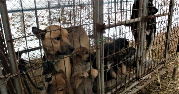 Goyang, South Korea, Shut down the illegal dog farms!