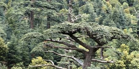 Les forestiers de l'affaire de Khenifra: enfin libre