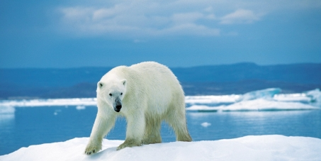 Nous demandons au gouvernement canadien de renoncer au commerce international de l'ours polaire: de ses parties ou de ses produits dérivés; et d'interdire la chasse de cet animal aux chasseurs touristes.