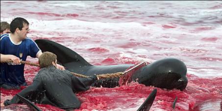 Признать в России дельфинов и китов личностями, имеющими права! Запретить их убийство и эксплуатацию!