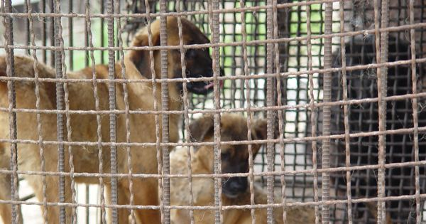 Namhae-gun, South Korea, Shut down the illegal dog farms!