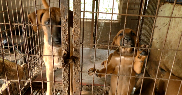 Clarence-Rockland, Tell SisterCity, Boeun,Korea, That We're Opposed to the Torture of Dogs